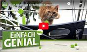 Einfach Genial Sendung über die Faltkatzenleiter